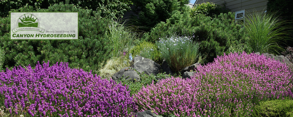 Is There A Way To Achieve A Truly Beautiful Drought Tolerant Garden? There  Is.