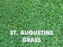 Drought tolerant grass hydroseeding - Drought tolerant grass varieties ...