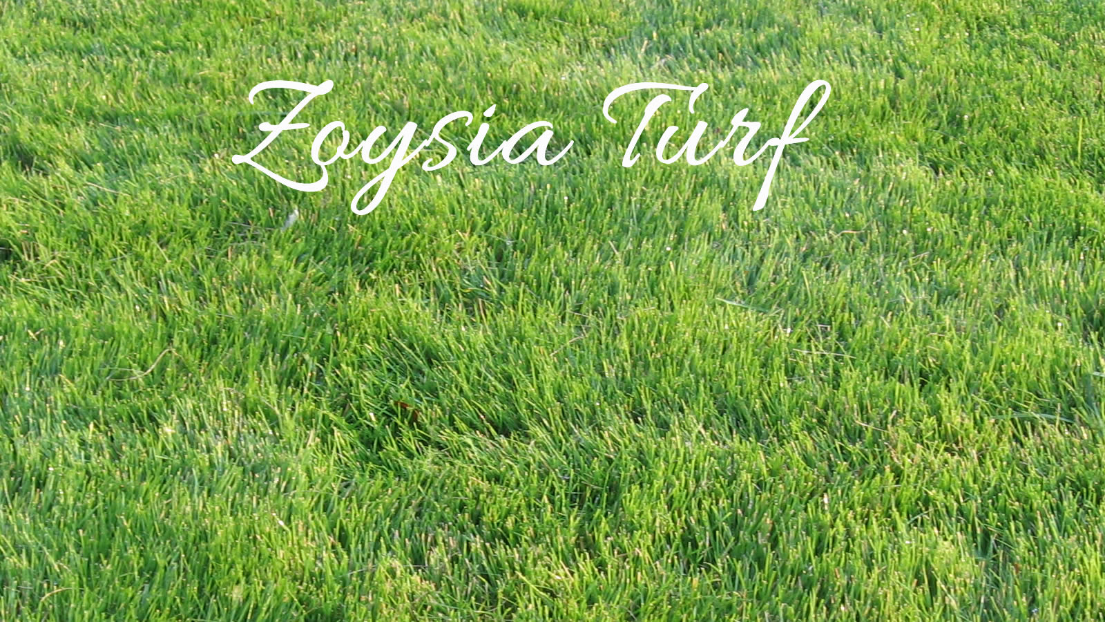 Types Of Turf Grass 28 Images The Complete Beginner S Guide To Lawn Grass Freedom Lawns