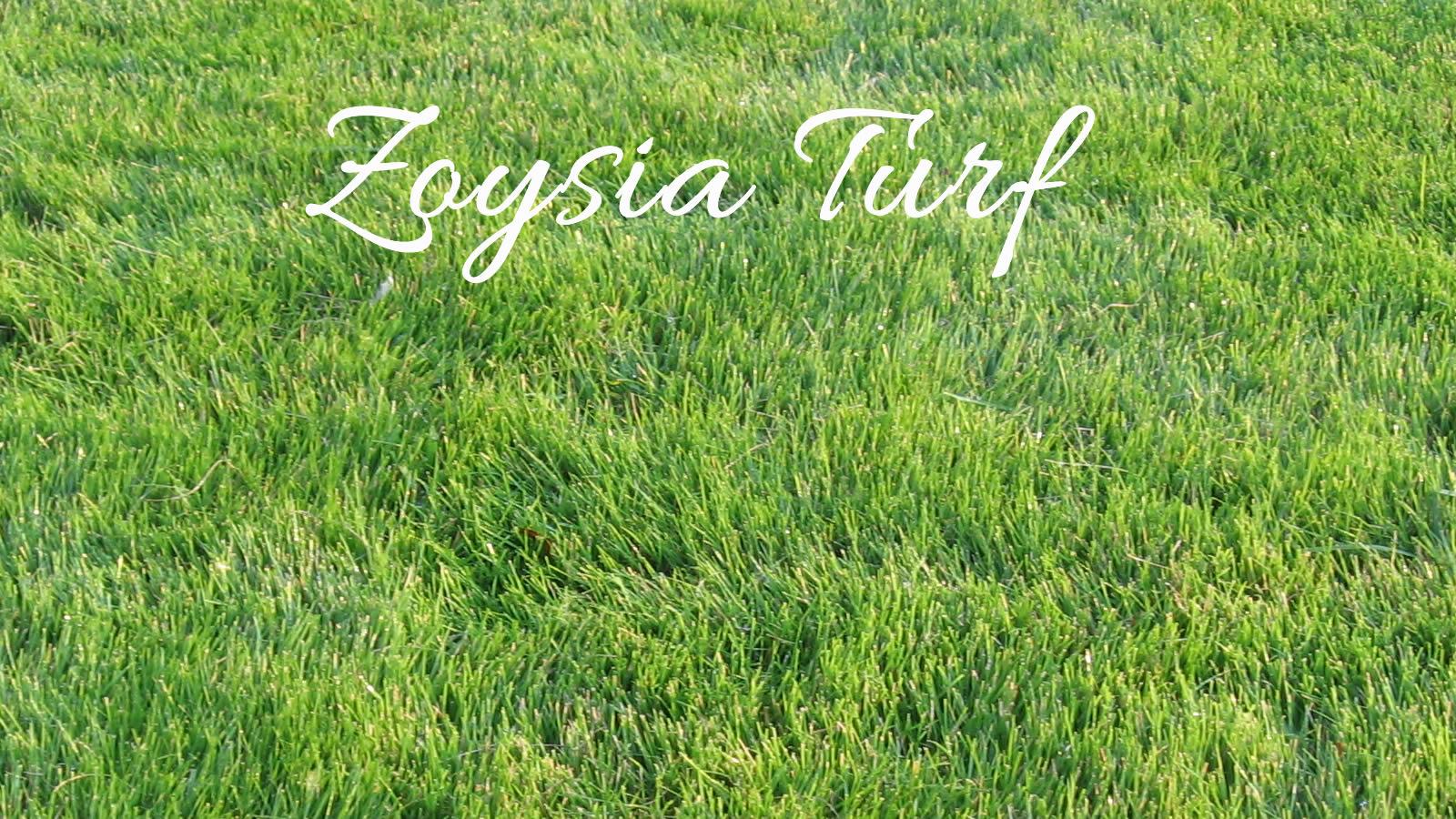 Zoysia Turf